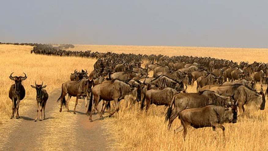 Apply for a Wildebeest Migration Safari