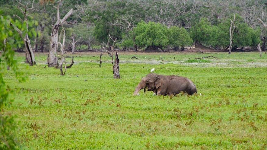 Bird perched on elephant