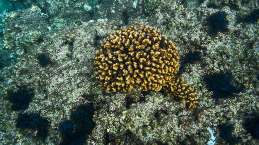 The corals of Mexico