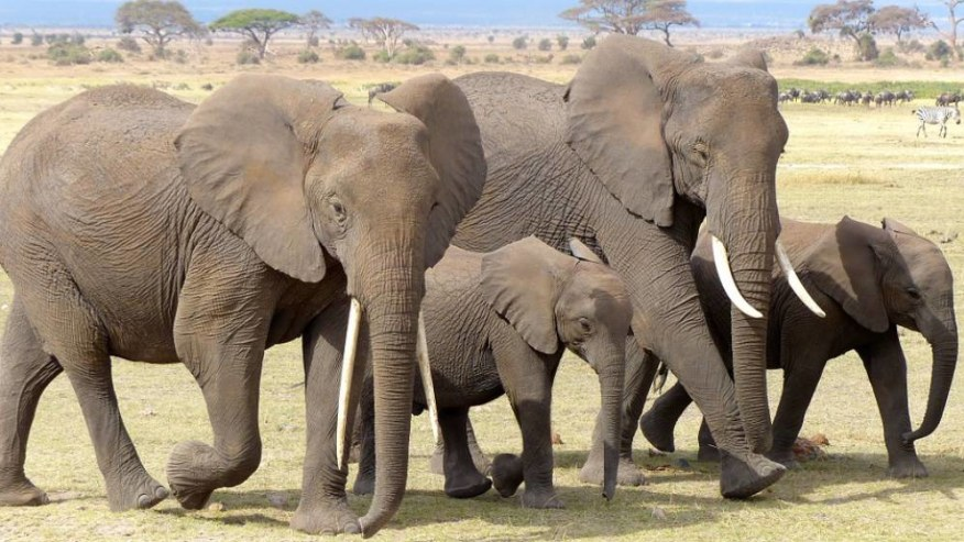 Kenya; Best tourist attractions