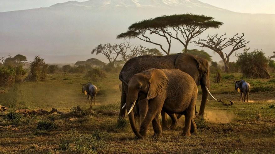 elephants and wildebeets