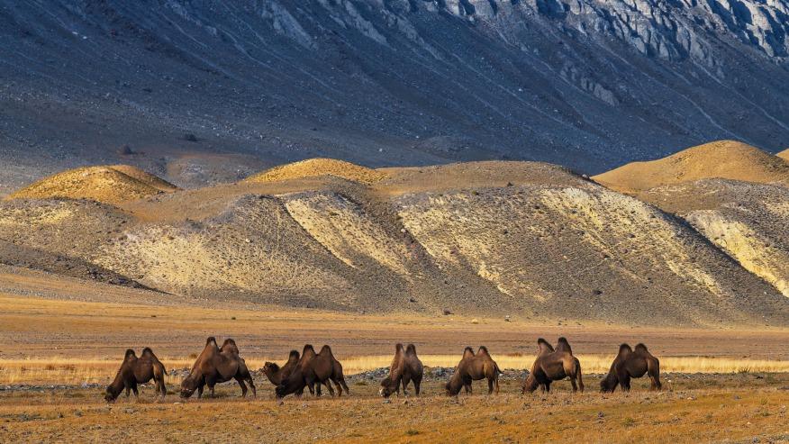 Chuiskaya Steppe