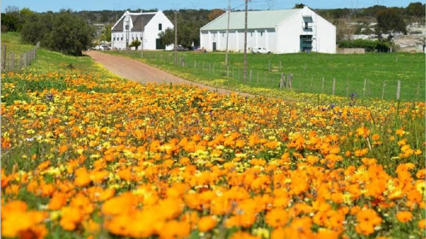 August-September Flower Season