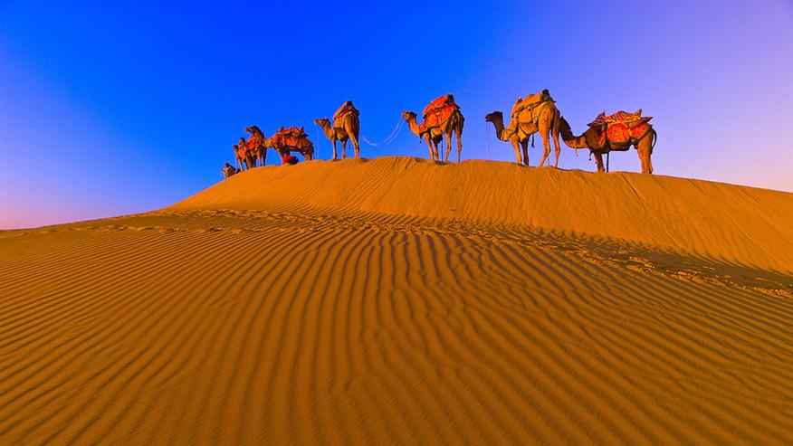 Camel safari on dunes