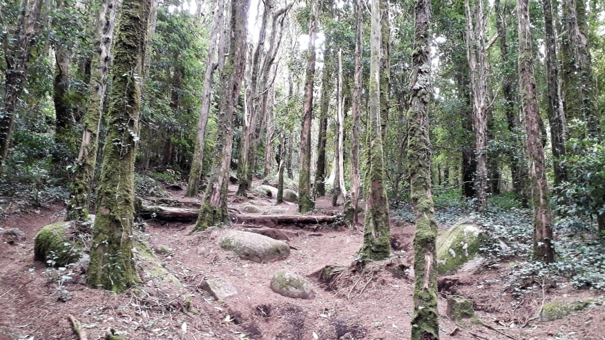 The tranquil wilderness of the Sintra Cascais Natural Park