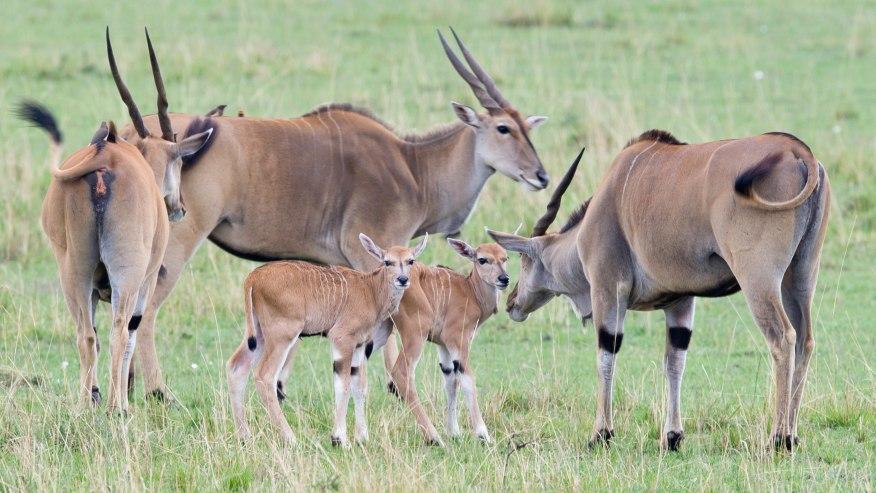 Game viewing at Kenyan parks
