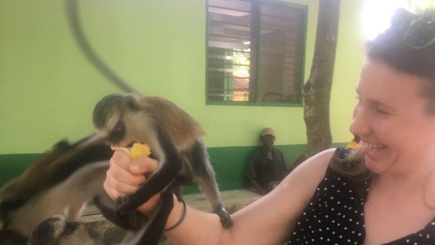 Feeding young monkeys