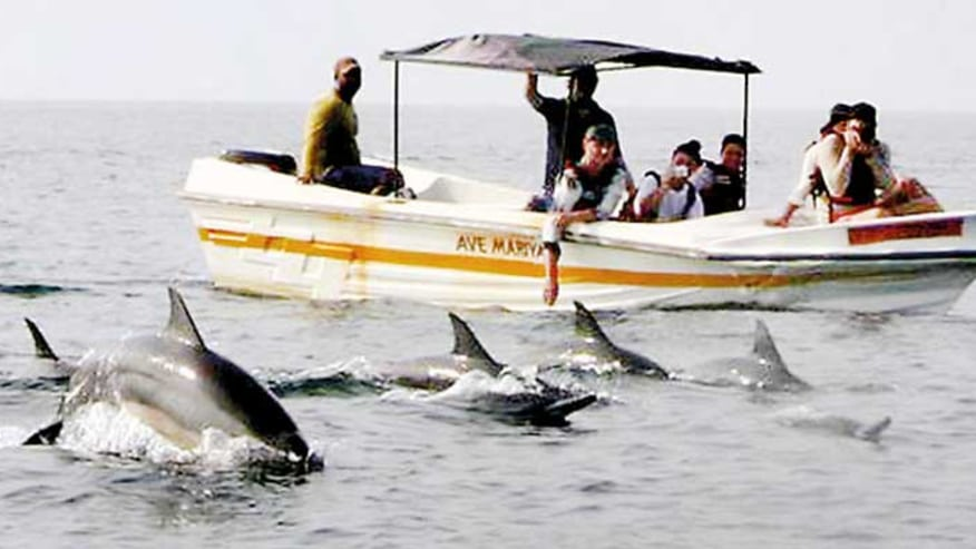 Savour a Dolphin Watching Day Trip