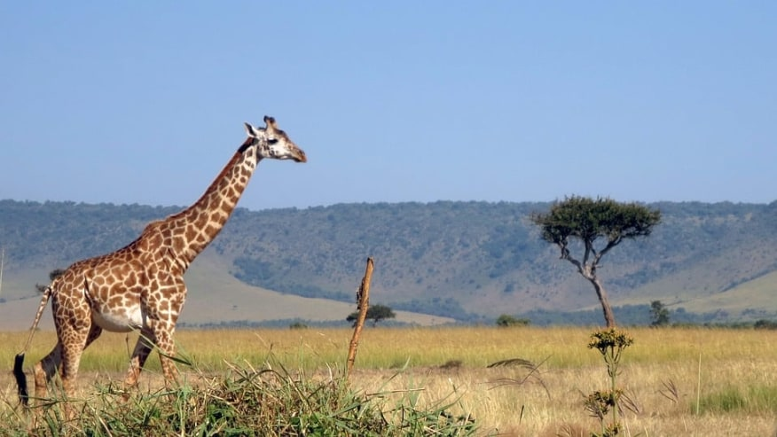 Delve into Wildlife safaris and local culture