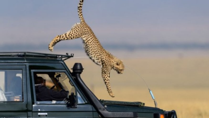 East Africa Safari Holidays