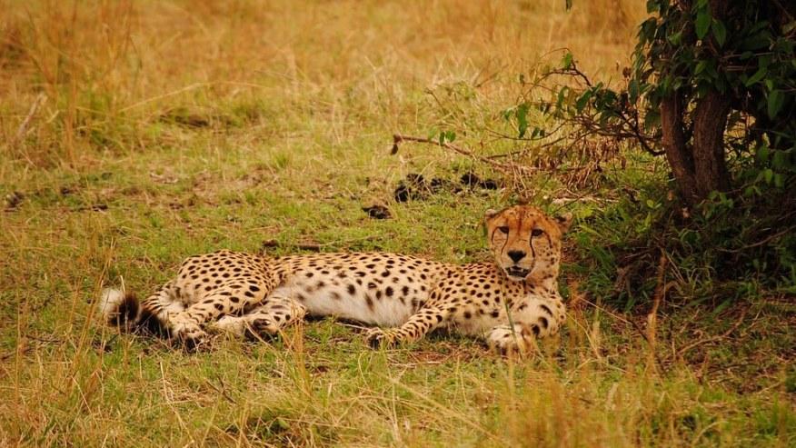 Safari into Two Kenyan Nature Reserves