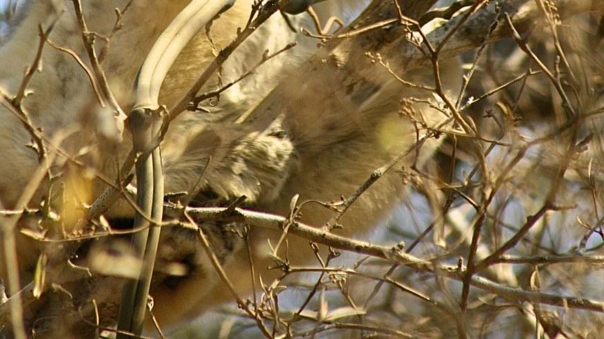 Lemur in the national park