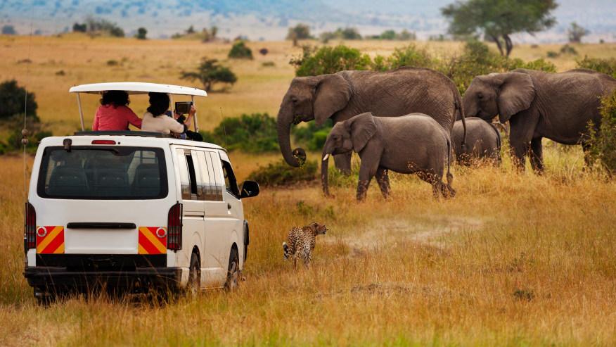 cheetah and elephants