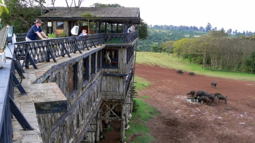 Kenya treetop lodge