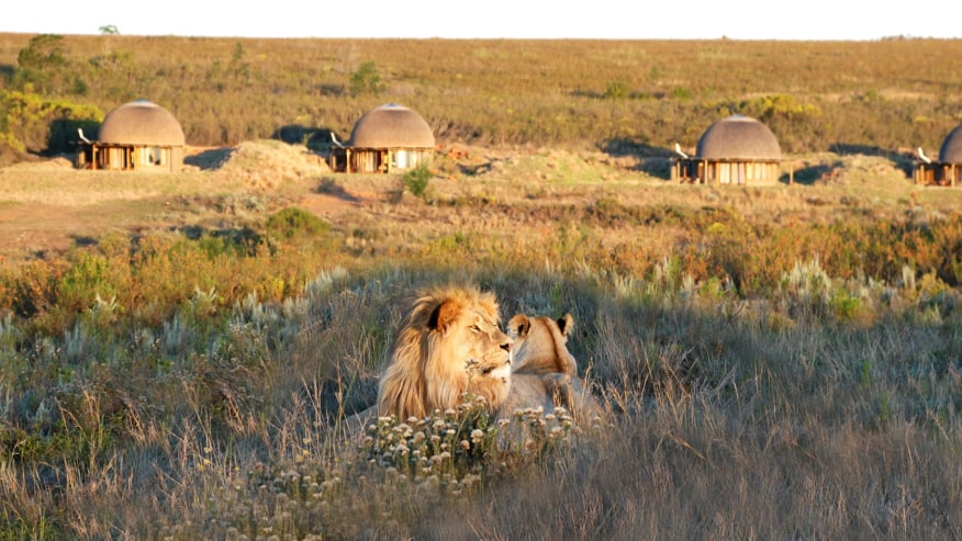 Safari in a Luxurious Game Reserve