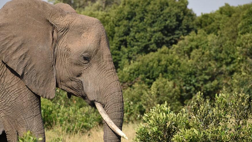 Rejoice in Endless Wildlife Possibilities