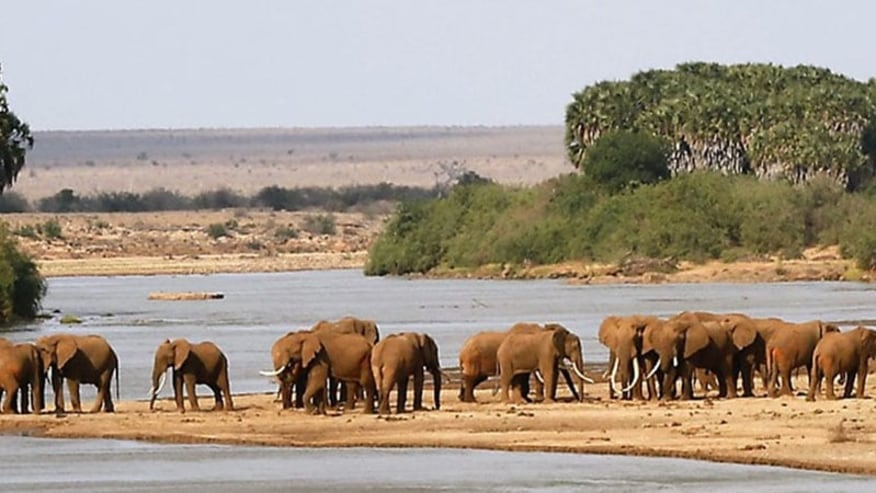 Elephant Herd grazing the Vast park, by the river sides