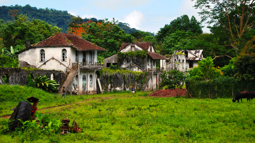 Go for a hike through the rainforests of Obo Natural Park in this 8-hour tour