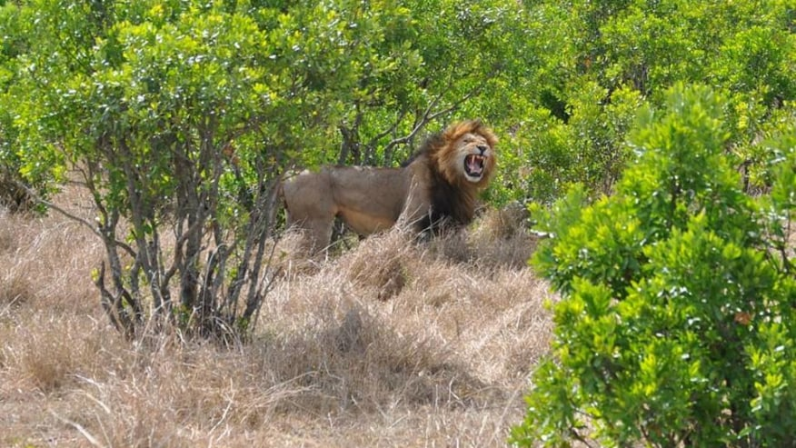 Book this Budget Safari in the African Wilderness