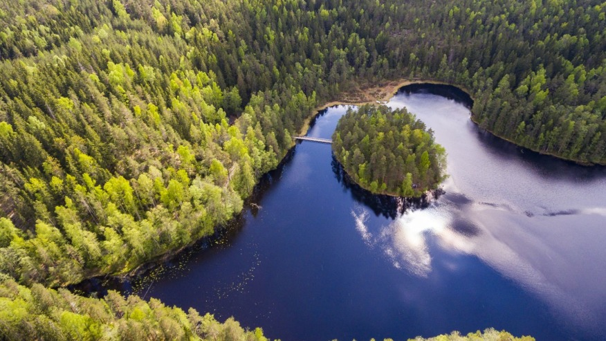 The Nuuksio forest