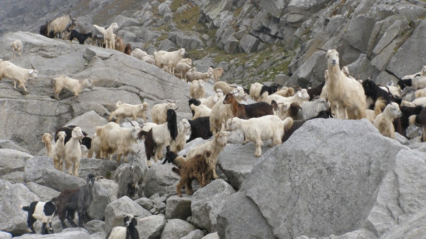 Meet herds of sheep as you progress on your trek