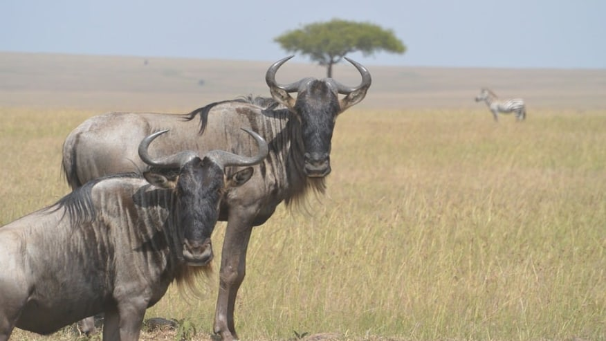 Safari and Camp in Wild Kenya