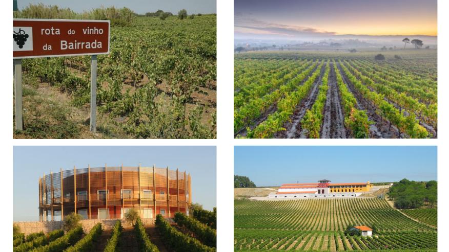 Explore the Bairrada Wine region