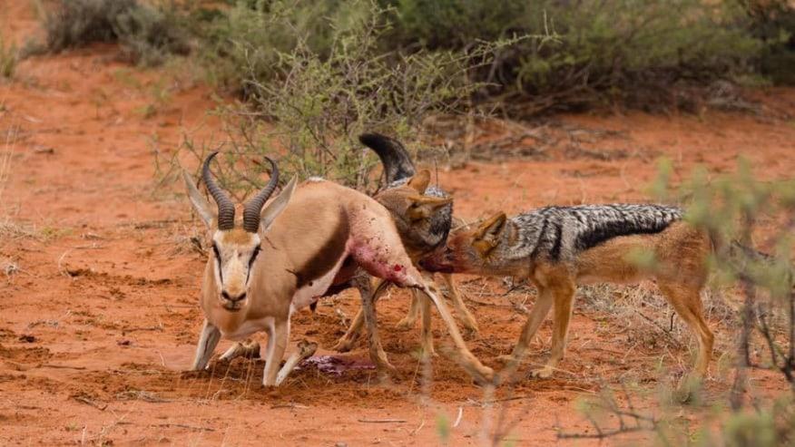 Enjoy with this adventure Kenyan safari tour