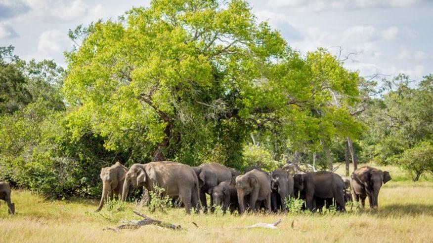 elephant herd in the wild