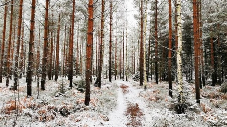 Forest trail covered by snow