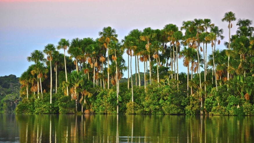 palm swamp forest at Lake Sandoval