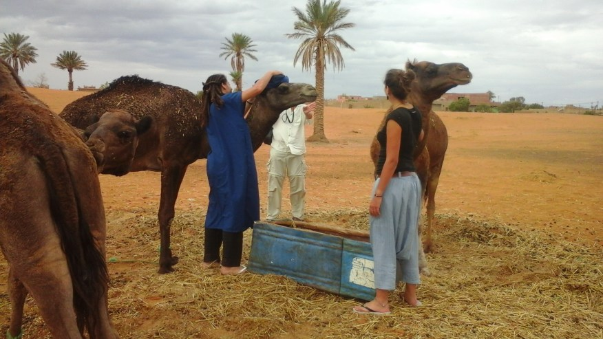 Getting ready for camel ride