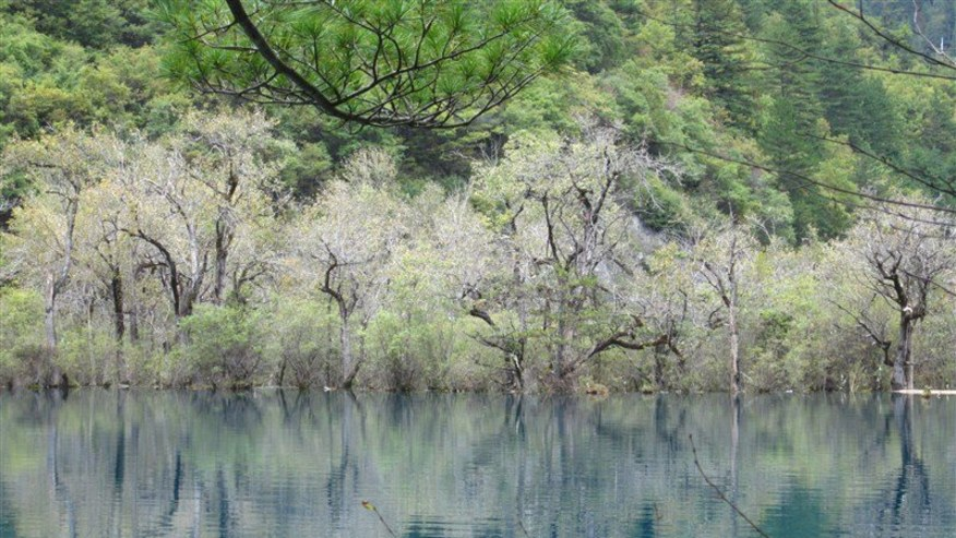 Travel Tips for Travellers to Jiuzhaigou Valley