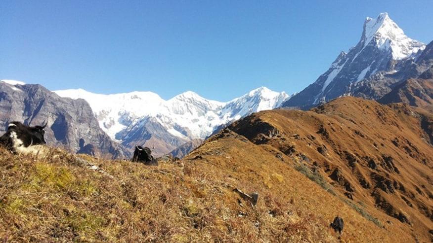 Mardi Himal Trek – A Complete Guide