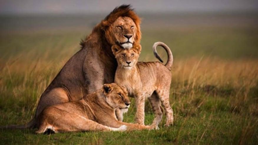 A family at play