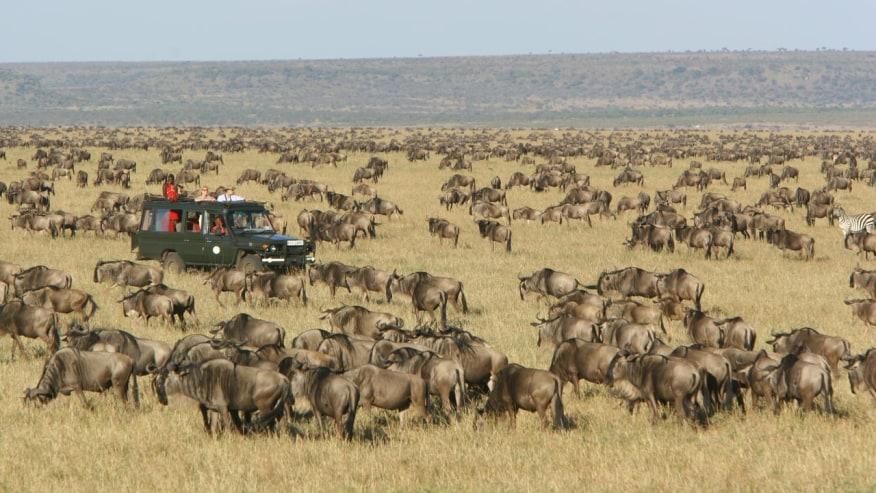Annual Wildebeests migration