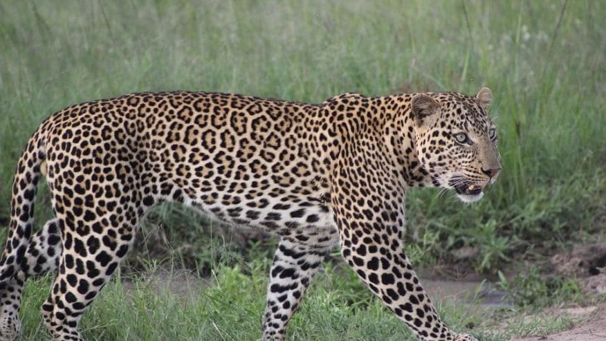 Escape to the wild wonders of Mara