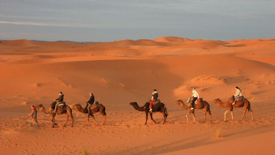 Camels Ride