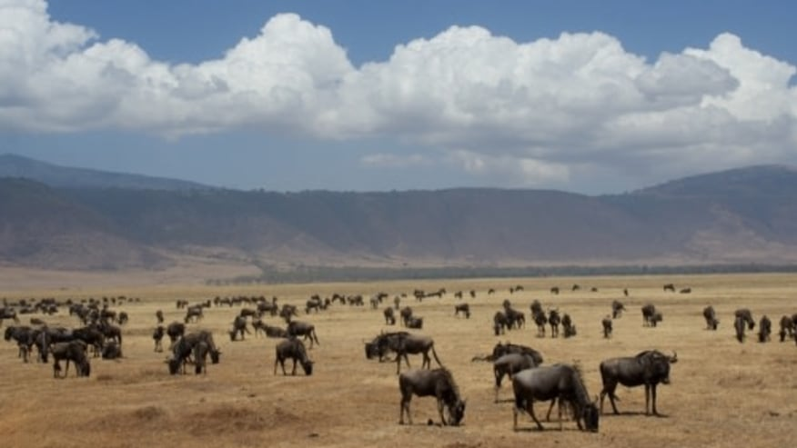 wildlife grazing in the crater
