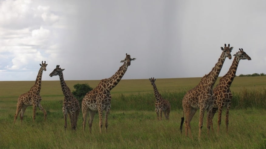 Possess Exciting Adventures at the African Reserves