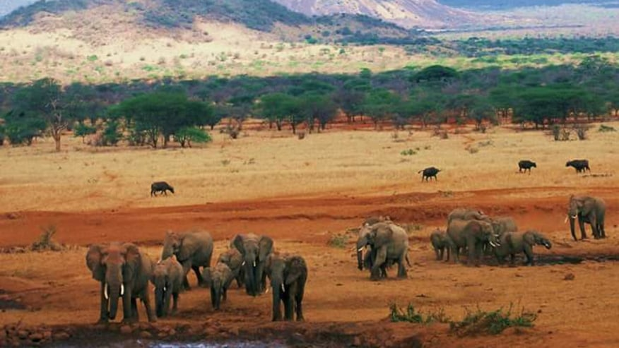 Herds of Elephants at watering hole