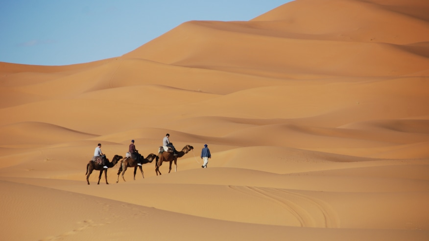 Explore the Sahara Desert on a Camel Back