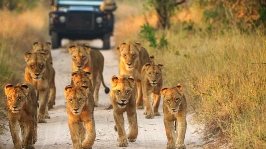 Follow the Wild