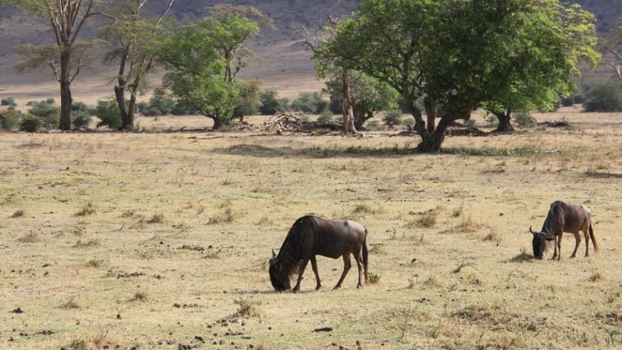Wildebeest Migration Safari with Tropical Wild Expeditions