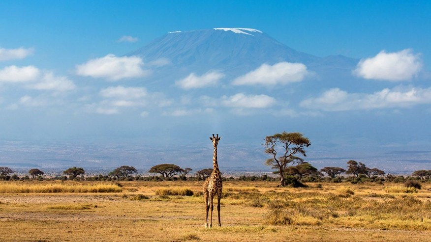 Do Thrilling Safaris in East African Wilderness