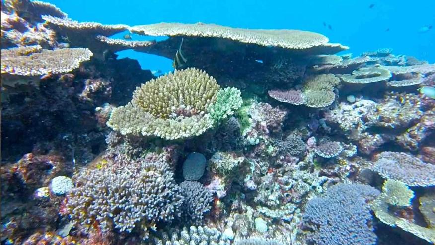 Pristine reef !