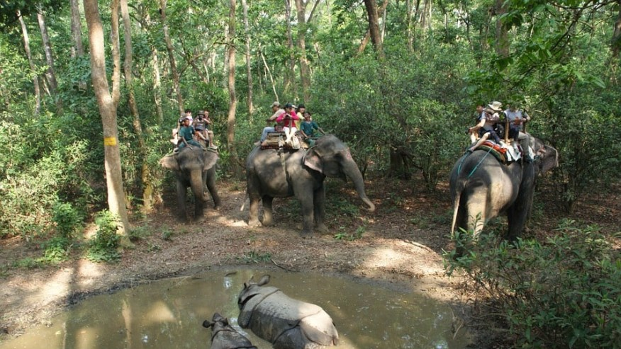 Elephant Safari in Himalayan foothills