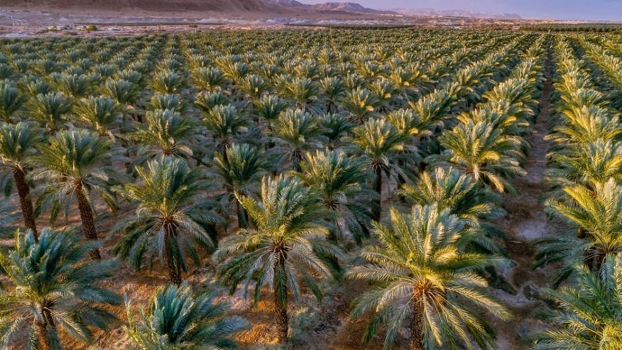 Palm agriculture