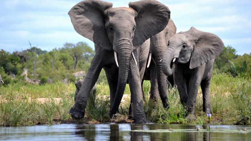 Partake in Incredible Safaris Inside this African Park