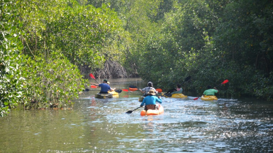Kayak away in the water amidst mangrove forest